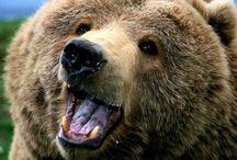 Bear ❤️
