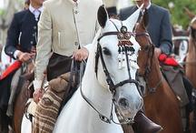 El caballo/o cavalo