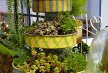 vegetal & garden
