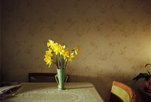 DAFFODIL / Who doesn't need a bit of sunshine? / by Jimmie Henslee