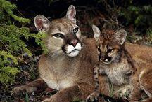 Wildlife / Beautiful living in the wilde