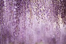 Violet Hues / by Landen Ellis