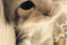Animals ^.^