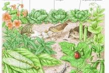 huerto / Huerto, agricultura,  huerto urbano, mini huertos, soluciones ecológicas
