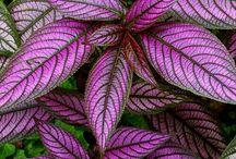 folhagens colorida pink e cor branca