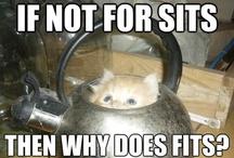 Tea of a cat