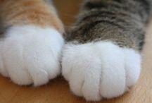 猫 の 手
