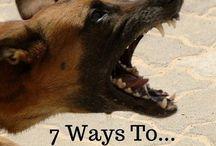 Dog Bad Habits