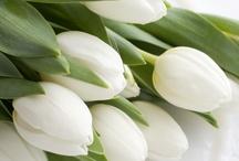 Send me flowers)