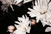 Flowers & Everything