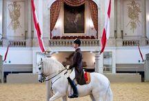 Spanish Riding School of Vienna