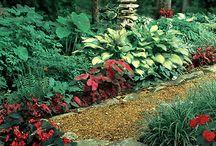 Garden Lanscapes