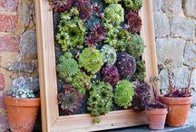 Parete Succulente