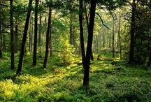 Forests / Ancient Forest setting inspiration