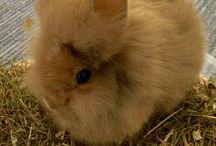 """Foxbunny named """"Cutie"""""""