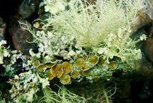 Lichen / by Cindy Hollett
