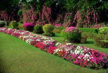Park bahçe