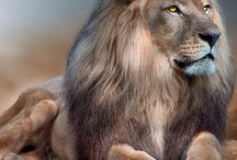 keep on the best of Lion