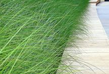 Grass-scapes