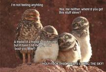 Makes me giggle