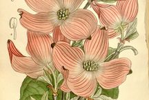 I love .......botanicals. / So old and so pretty. So are the illustrations and other great finds.. / by Sandy Kohring