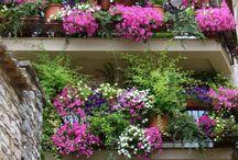 Patio, verandas and balconies