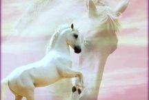 SENSATIONAL HORSES