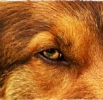 Care For Dogs / Tips, advice and everything to make a healthy and wagging dog