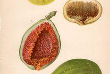 botanicalart