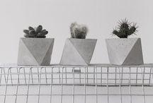 cactuc planter