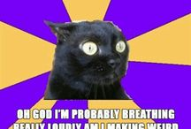 Anxiety Cat. Making me nervous!