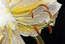 Painting Lilies / Lilies / by Francoise Chauray