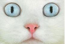 Feline Frenzy / by Lori Dauel