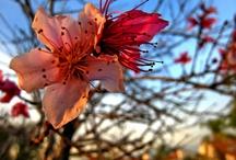 blossow