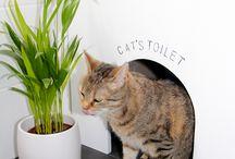 cats idea