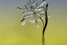 Homeschool ~ FIAR Snowflake Bentley