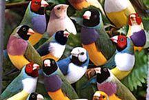 kuş turleri