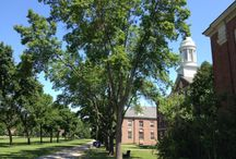 UMaine / The UMaine campus in Orono, Maine is a great place to visit. There is so much going on, we will highlight some of it here!  / by University Credit Union