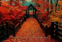 Favorite time of year  / by Lisa King Allan