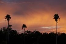 Palm Harbor, FL