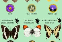 Butterfly guide