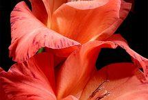 Flowers / ♥