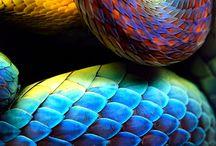 Animal scales / by Miguel Angel Barragán Monroy