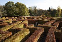 Maze at Scone Palace
