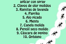 Remedies contra insectos