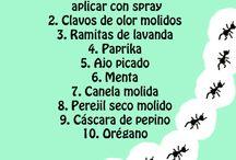 Insecticidas casero