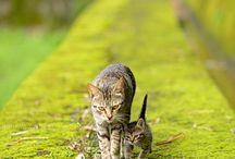 gatos / Sobre gatitos