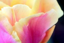Tulips  / by S. P.