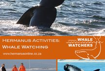 Whale Watching / Join the Whale Watchers for an unique boat-based whale watching trip in Hermanus, close to Cape Town in South Africa. More info: http://www.hermanuswhalewatchers.co.za