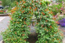 Zahrada hrou - Garden play